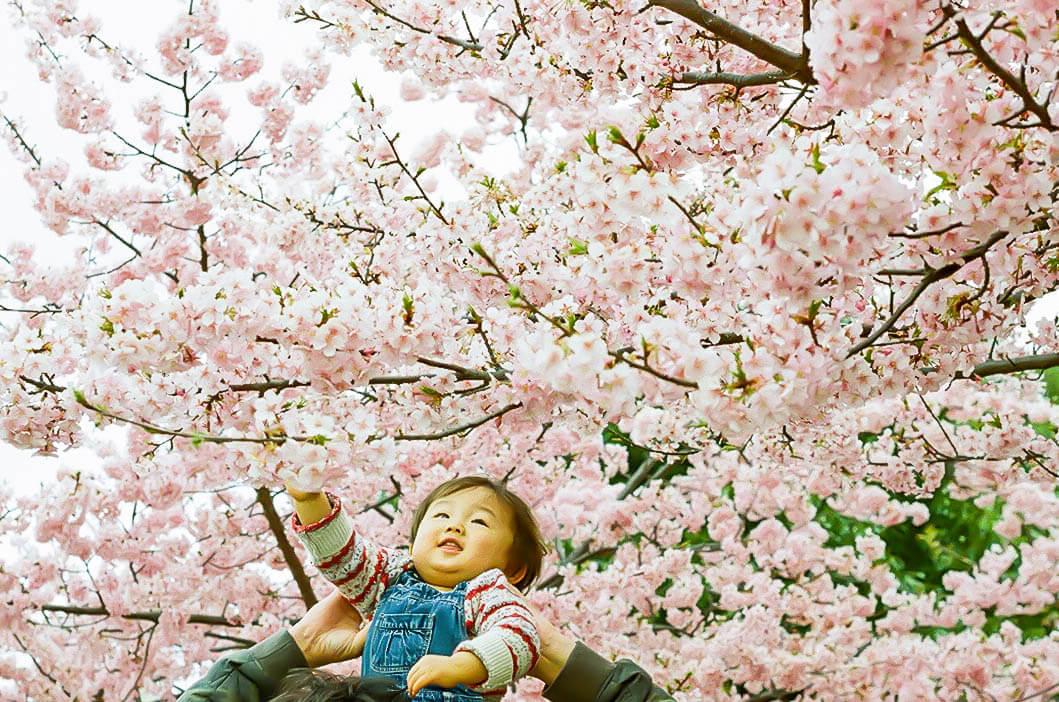 CanonFTb作例 お花見 河津桜